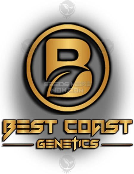 best-coast-genetics