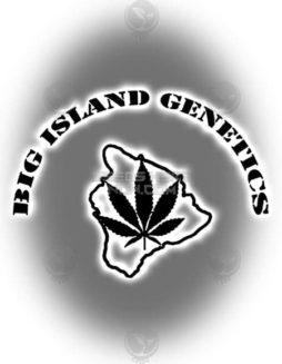 big-island-genetics