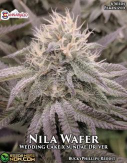 cannarado-genetics-nila-wafer