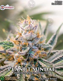 cannarado-genetics-peanut-sundae