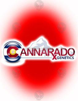 cannarado-genetics-ph