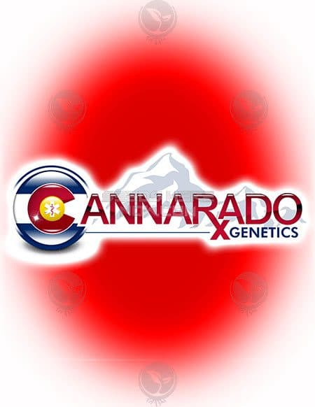 cannarado-genetics-ph