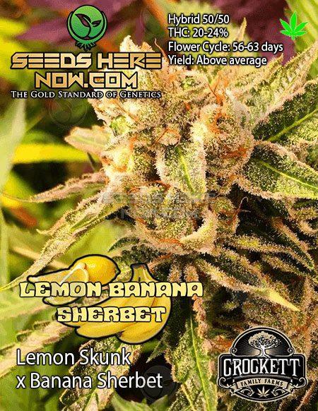 crockett-family-farms-lemon-banana-sherbet-front