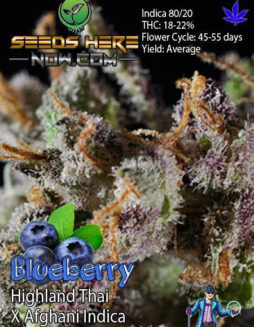 dj-short-seeds-blueberry