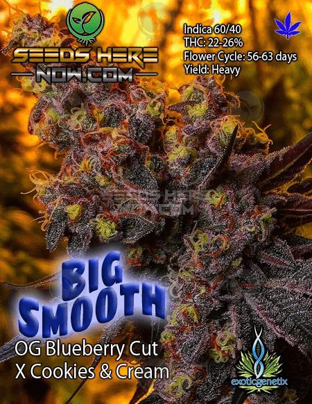 Exotic Genetix Purple Lamborghini Seeds Here Now
