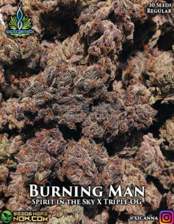 exotic-genetix-burning-man