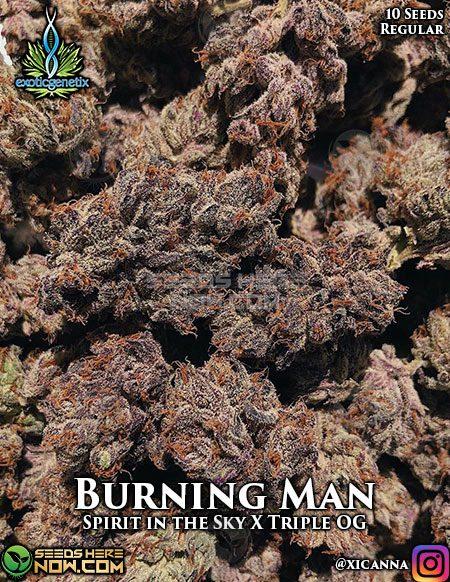 exotic-genetix-burning-man