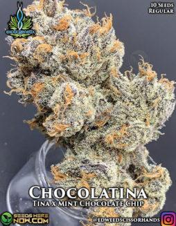 exotic-genetix-chocolatina