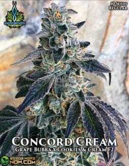 exotic-genetix-concord-cream
