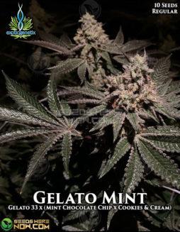 exotic-genetix-gelato-mint