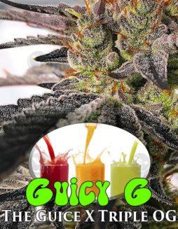 exotic-genetix-guicy-g