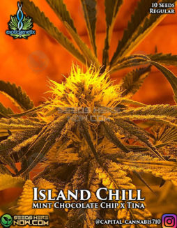 exotic-genetix-island-chill