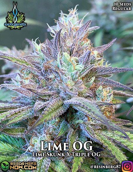 exotic-genetix-lime-og