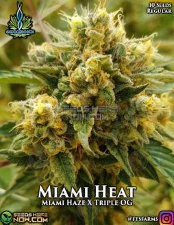 exotic-genetix-miami-heat