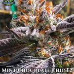 exotic-genetix-mint-chocolate-chip