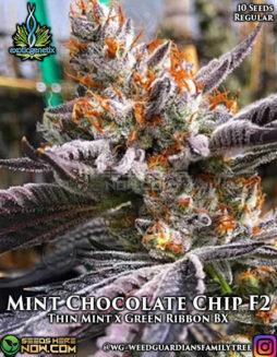 exotic-genetix-mint-chocolate-chip
