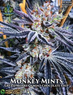 exotic-genetix-monkey-mints