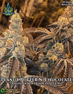 exotic-genetix-peanut-butter-n-chocolate