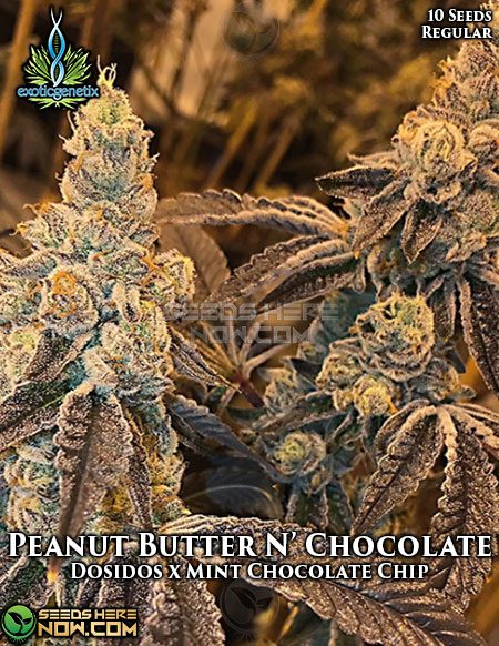 exotic-genetix-peanut-butter-n-chocolate