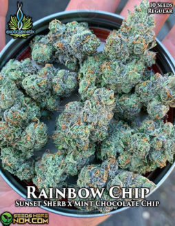 exotic-genetix-rainbow-chip