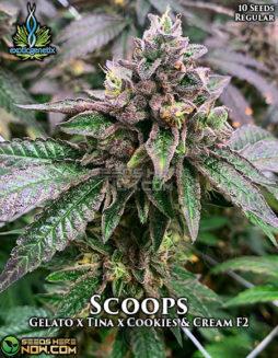 exotic-genetix-scoops