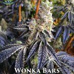 exotic-genetix-wonka-bars