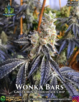 exotic-genetix-wonka-bars