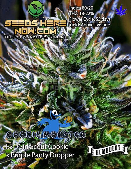 Humboldt Seed Company - Cookie Monster