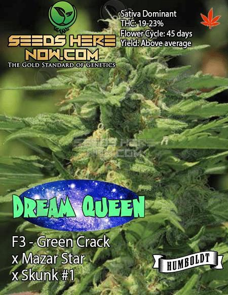 Humboldt Seed Company - Dream Queen