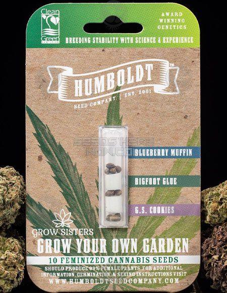 humboldt-seed-company-grow-sisters-gyog