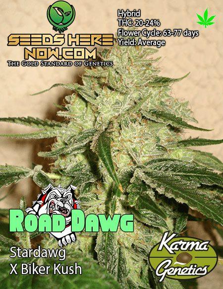karma-genetics-road_dawg