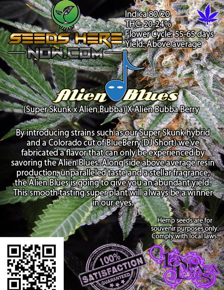 la-plata-labs-AlienBlues_Back