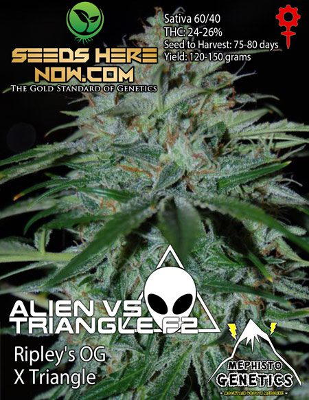 Cannarado-genetics-seeds
