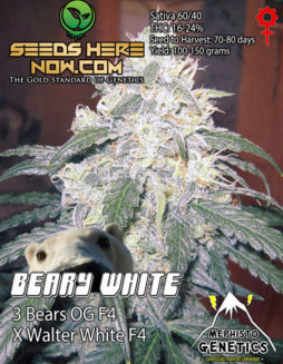 Cannarado-genetics-seeds
