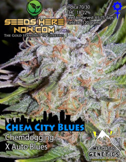 Cannarado_genetics_seeds