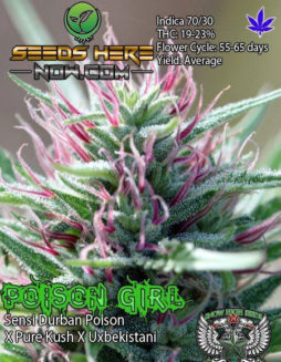Buy-marijuana-seeds