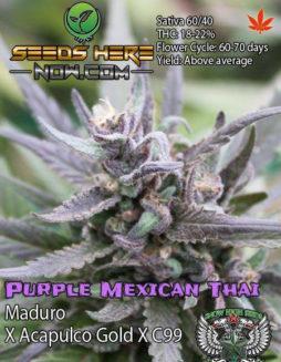 Buy-marijuana-seeds