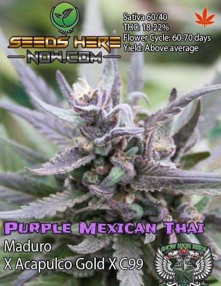 Buy_marijuana_seeds