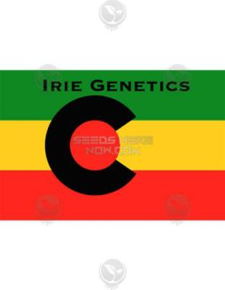 irie-genetics-ph-1-1