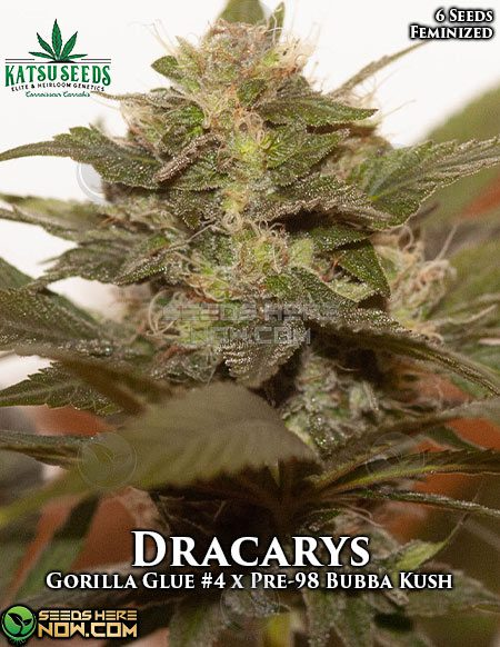 katsu-seeds-dracarys-1