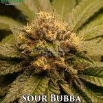 katsu-seeds-sour-bubba-1