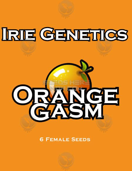 irie-genetics-orange-gasm