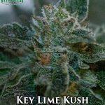 katsu-seeds-key-lime-kush