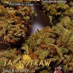 homegrown-natural-wonders-jack-straw