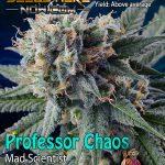 homegrown-natural-wonders-professor-chaos