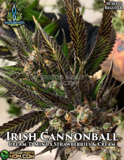 exotic-genetix-irish-cannonball