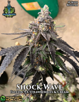 exotic-genetix-shock-wave