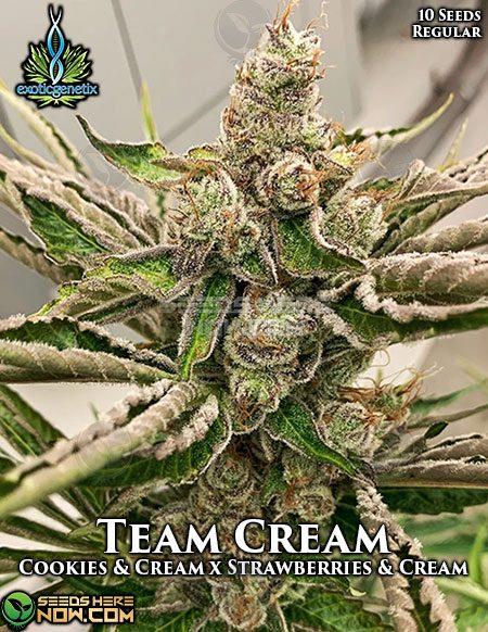 exotic-genetix-team-cream