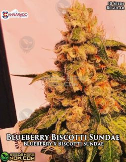 cannarado-genetics-blueberry-biscotti-sundae