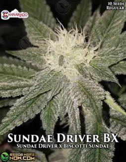 cannarado-genetics-sundae-driver-bx